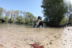 bucks was lovin' the water......